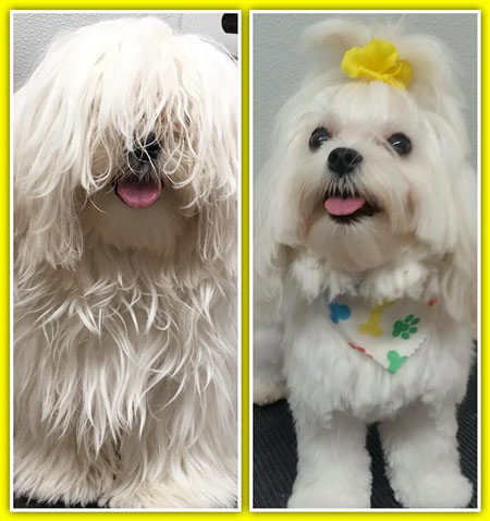 Pet Grooming in Mt. Laurel NJ 08054