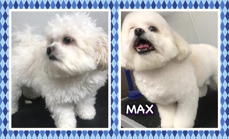 Mt. Laurel NJ Pet Grooming