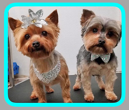 Mt. Laurel NJ Dog Grooming