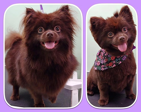 Pet Grooming Mt. Laurel NJ