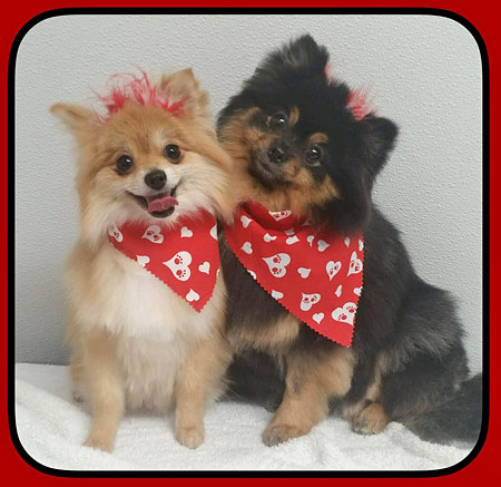 Pet Groomers Mount Laurel NJ 08054