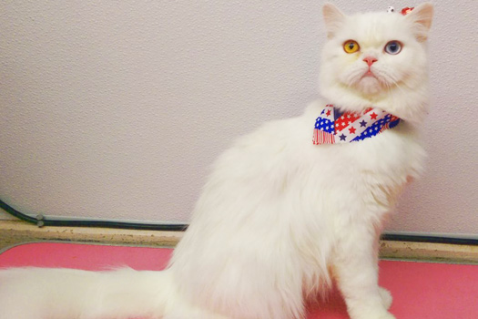 The Pet Grooming Studio - Mount Laurel NJ Dog & Cat Groomer